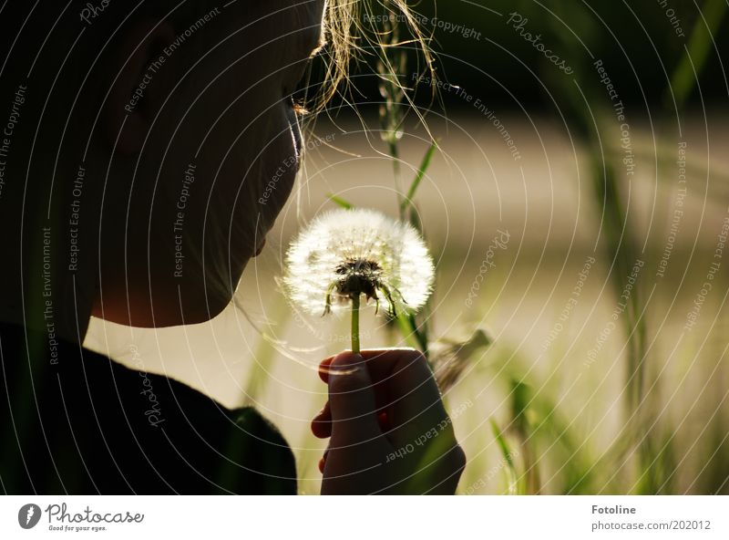 Another dandelion... Human being Girl Infancy Head Hair and hairstyles Hand Fingers Environment Nature Plant Summer Warmth Flower Bright Dandelion Colour photo
