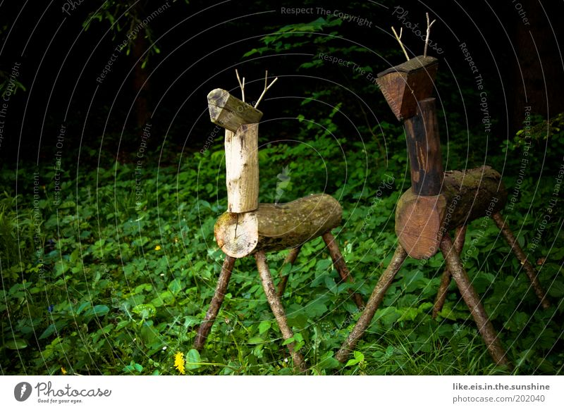 2 stags stand in the forest very still & silent Hunting Sculpture Plant Summer Tree Grass Bushes Garden Park Forest Virgin forest Animal Wild animal Roe deer