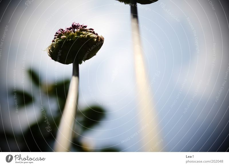 worm's-eye view Flower Blossoming Fragrance Life Colour photo Exterior shot Day Worm's-eye view Bud Flower stem Stalk Upward Skyward Growth