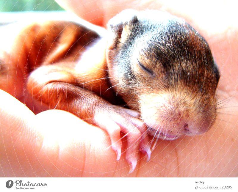 Hagen Squirrel Animal Rodent Claw Nest squirrel baby Baby animal Stone block