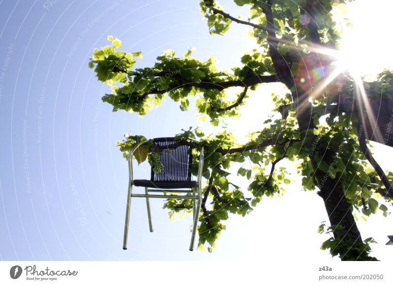 Nature Sky Tree Sun Summer Wood Metal Environment Chair Branch Exceptional Hang Beautiful weather Accident Strange
