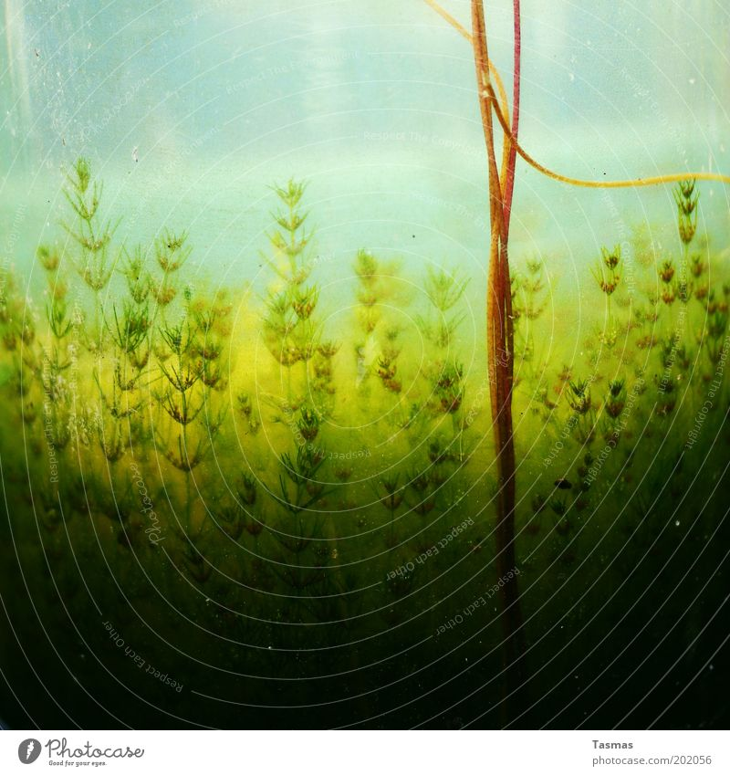 get on top Nature Plant Blossom Exotic Growth Aquatic plant Foliage plant Colour photo Underwater photo Abstract Structures and shapes Natural growth