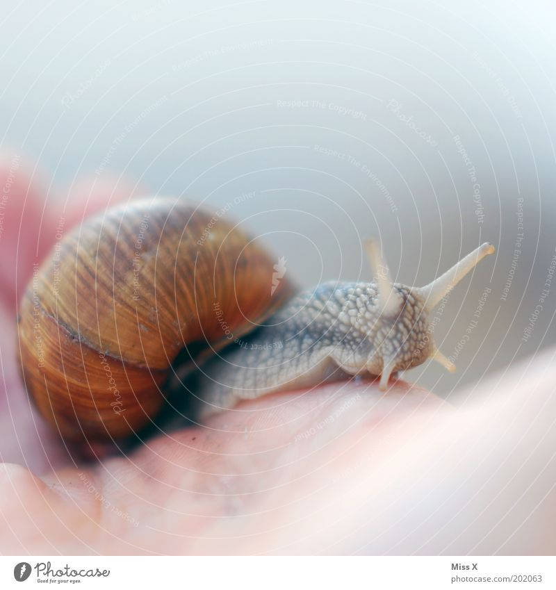 Hand Animal Science & Research Disgust Snail Feeler Crawl Slimy Movement Snail shell Love of animals Vineyard snail
