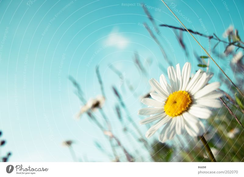 flower meadow Happy Life Well-being Fragrance Summer Summer vacation Garden Environment Nature Plant Sky Spring Beautiful weather Flower Grass Blossom Meadow