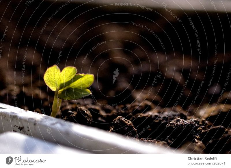 Nature Green Plant Flower Environment Life Spring Small Garden Earth Brown Free Growth New Cute Harmonious