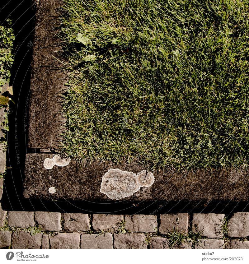 Green Meadow Grass Corner Near Cobblestones Symmetry Sharp-edged Detail Boundary