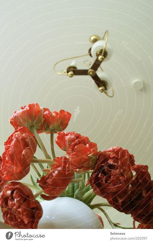 White Flower Red Lamp Style Blossom Room Lighting Flat (apartment) Design Fresh Esthetic Decoration Blossoming Fragrance