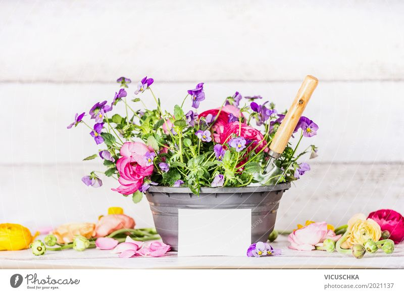 Flower pot with shovel and greeting card Style Design Leisure and hobbies Summer Garden Interior design Decoration Nature Plant Sand Spring Leaf Blossom
