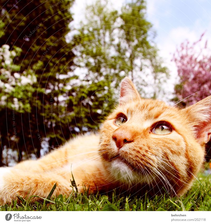Nature Tree Calm Eyes Animal Relaxation Grass Garden Cat Nose Lawn Bushes Ear Soft Animal face Lie