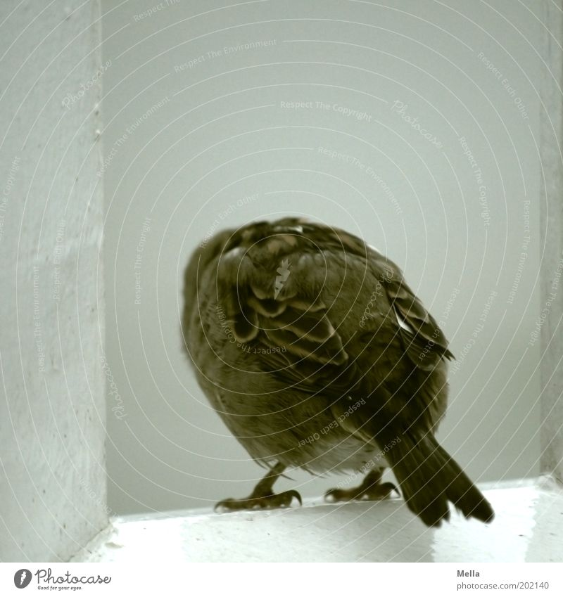 Nature Loneliness Animal Gray Brown Bird Sit Feather Wing Watercraft Longing Curiosity Cute Handrail Interest Individual