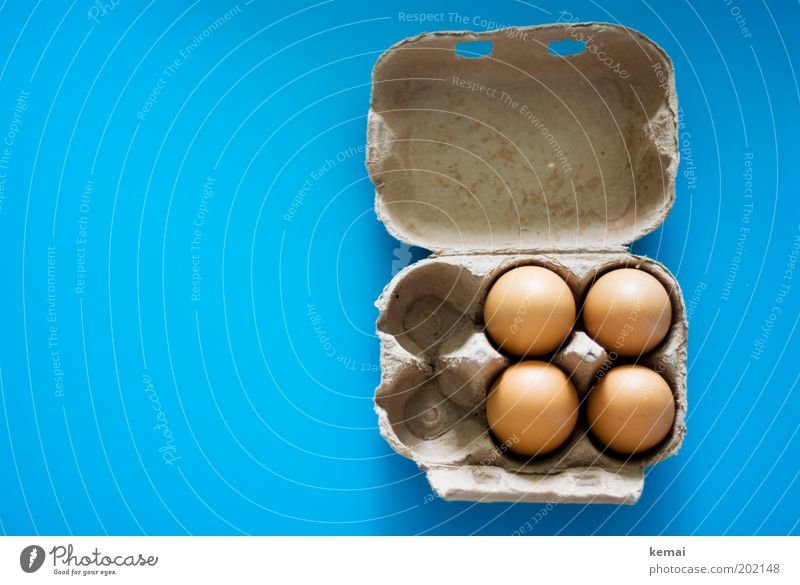 Karolas eggs Food Egg Hen's egg Nutrition Organic produce Eggs cardboard Cardboard Packaging Tabletop Fresh Happy Good Delicious Blue Brown Appetite Nature 4