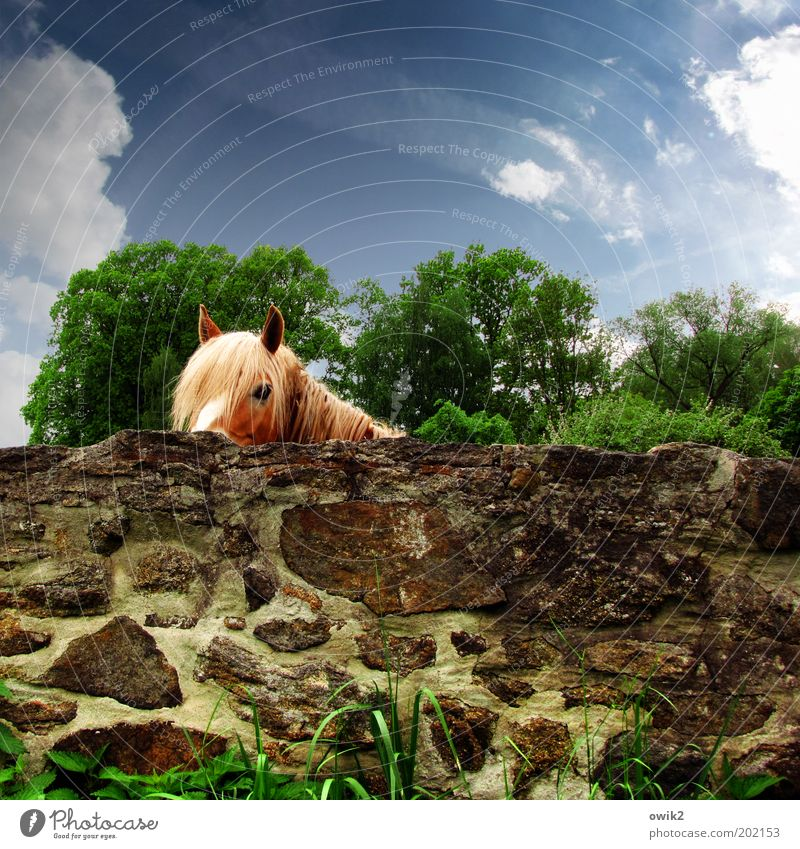 Nature Beautiful Sky Tree Green Plant Clouds Animal Wall (building) Grass Spring Garden Stone Wall (barrier) Warmth