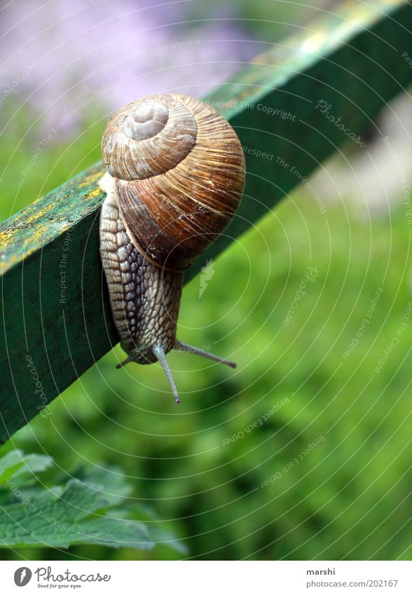 absurdly Spring Summer Garden Meadow Animal Snail 1 Small Green Vineyard snail Large garden snail shell Snail shell Pole Crawler lane Feeler Curiosity Slowly
