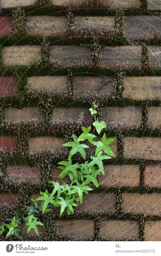 Nature Old Green Plant Wall (building) Garden Stone Wall (barrier) Park Power Dirty Growth Change Bushes Decline Moss