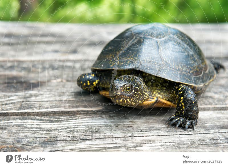 Big turtle on old wooden desk Nature Old Summer Green Animal Natural Grass Wood Small Garden Gray Brown Wild Wild animal Table Cute
