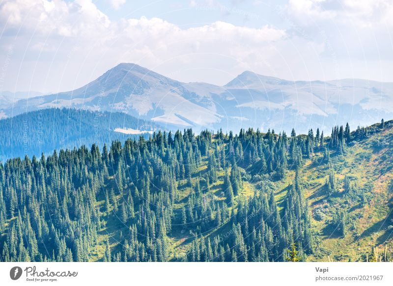 Green pine trees in the mountains Sky Nature Vacation & Travel Plant Blue Summer Colour Beautiful White Tree Landscape Clouds Forest Dark Mountain