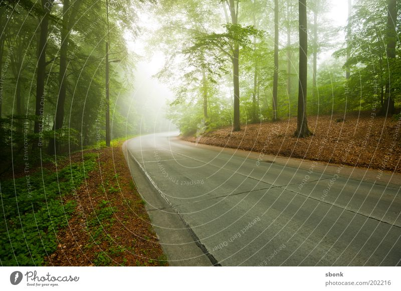 through morning scenes Environment Nature Landscape Fog Forest Traffic infrastructure Street Lanes & trails Moody Asphalt Country road Tree Colour photo