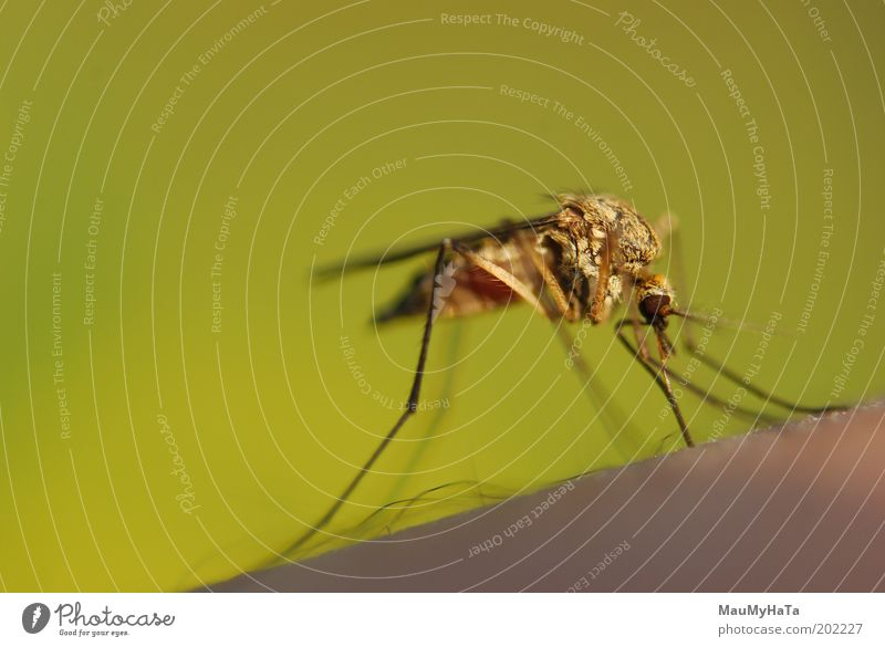 Gnat Old Green Animal Power Fly Cool (slang) Might Kissing Touch Macro (Extreme close-up) Worm's-eye view