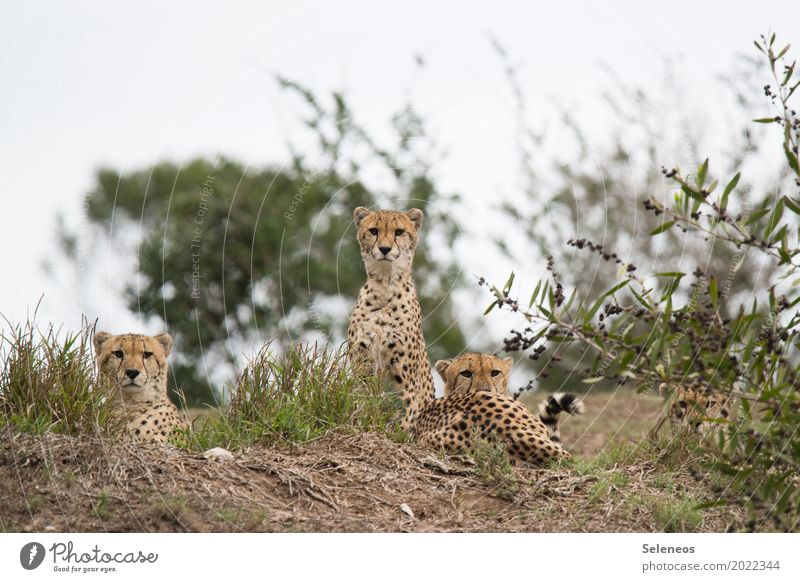 Nature Vacation & Travel Relaxation Animal Far-off places Environment Meadow Freedom Tourism Park Wild animal Bushes Adventure Group of animals Observe Pelt