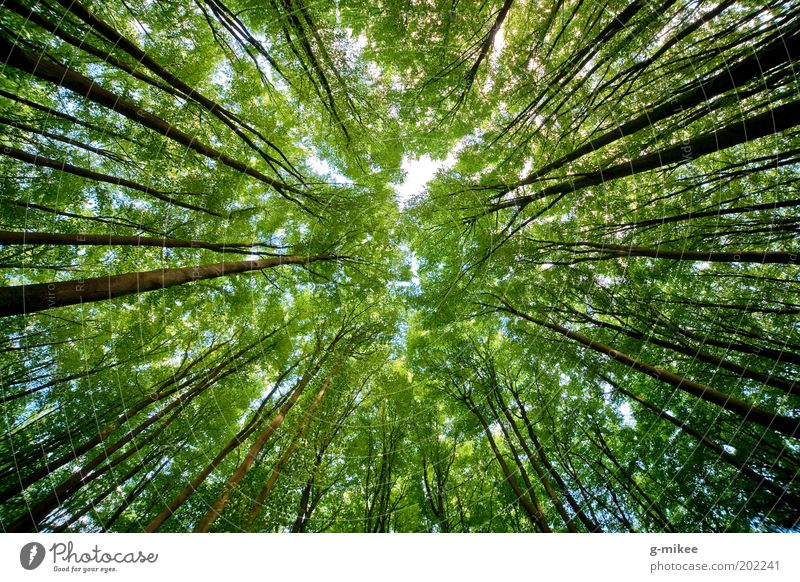 treetops Nature Sky Spring Tree Park Forest Large Tall Above Deciduous tree Center point Treetop Colour photo Multicoloured Exterior shot Deserted Day Contrast