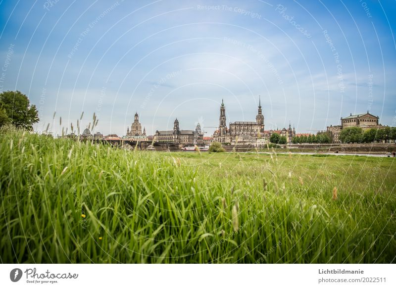 Dresden Elbwiese Tourism Sightseeing City trip Architecture Culture Nature Landscape Plant Summer Meadow Field River bank Grassland on the Elbe River Saxony