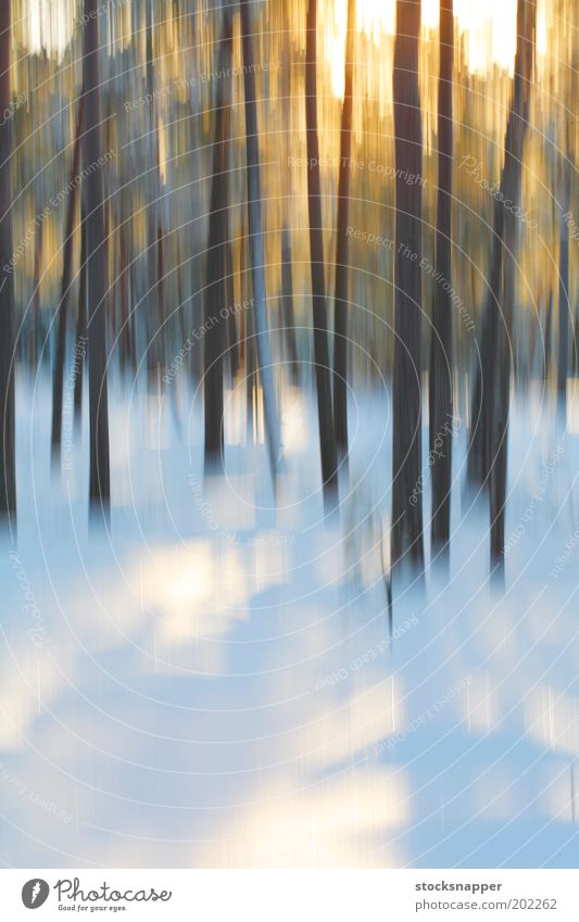 Winter forest Forest Blur Motion blur The Arctic Snow Tree Light Abstract