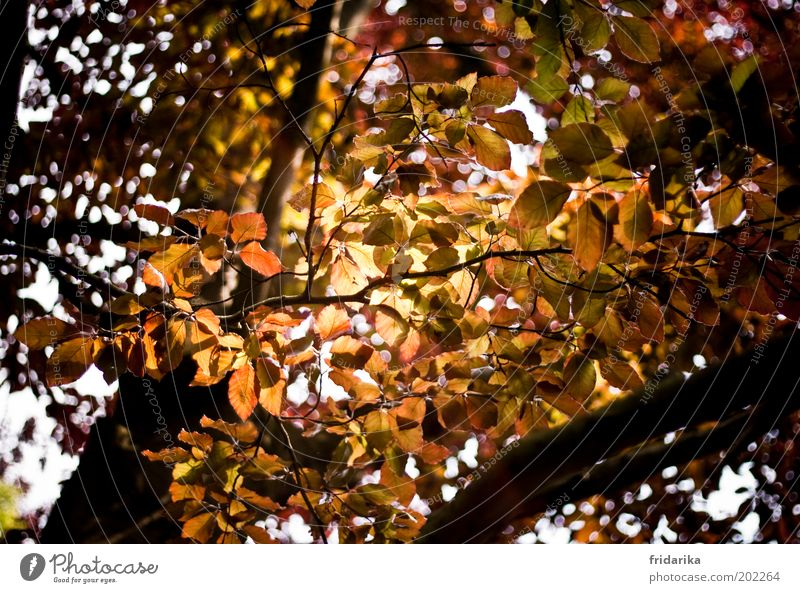 Nature Tree Plant Leaf Forest Life Relaxation Autumn Landscape Environment Growth Branchage Autumnal Autumnal colours Leaf canopy