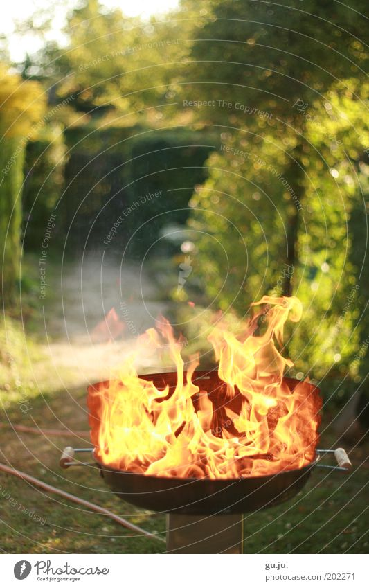 THE FLAMING GRILL MK IV Summer Garden Nature Plant Fire Beautiful weather Warmth Lanes & trails Barbecue (apparatus) Hose Hot Bright Yellow Red Flame Green Burn