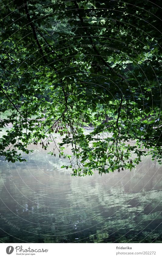 Tree Green Blue Plant Summer Leaf Cold Relaxation Spring Lake Air Waves Growth Lakeside Elements Hang
