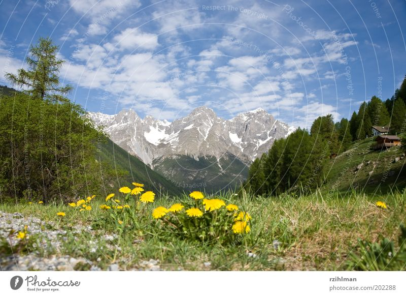 Tree Flower Green House (Residential Structure) Forest Meadow Blossom Grass Mountain Spring Landscape Field Rock Alps Idyll Fir tree