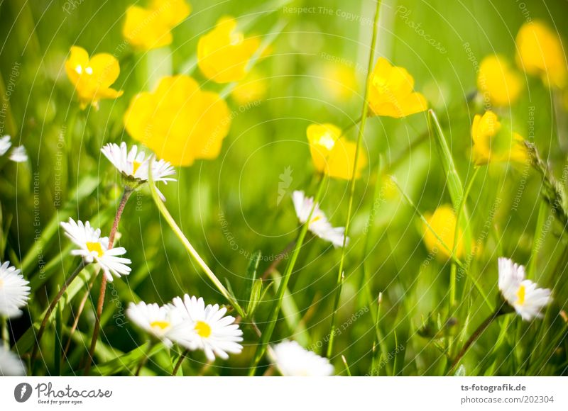 Flower Green Plant Summer Calm Yellow Relaxation Meadow Blossom Grass Spring Garden Happy Park Contentment Environment
