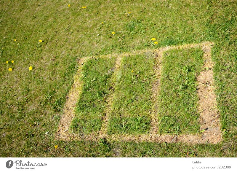 missing . . . Leisure and hobbies Summer vacation Nature Garden Meadow Blossoming To dry up Growth Sharp-edged Brown Green Lose Imprint Pattern Rectangle