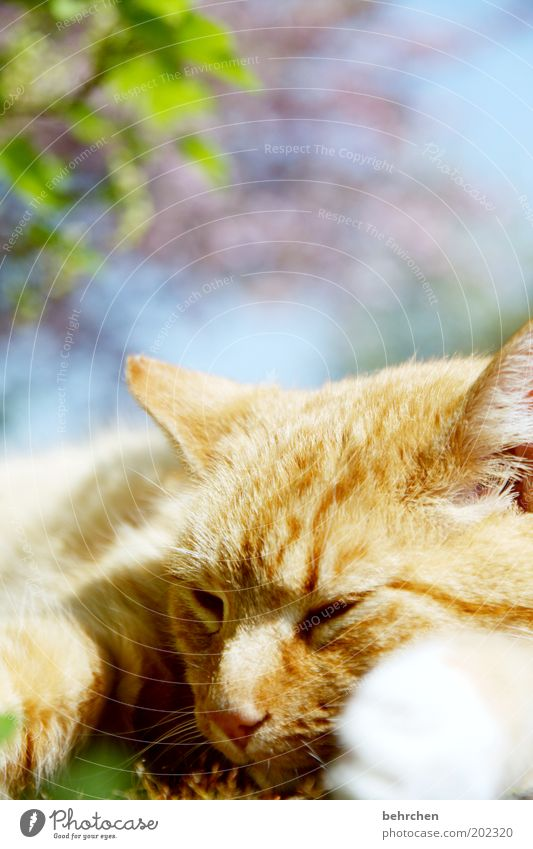 Sky Tree Flower Eyes Animal Dream Cat Contentment Nose Sleep Ear Animal face Protection Trust Pelt To enjoy