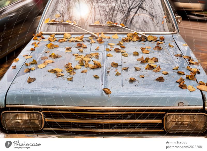 herbicraft Lifestyle Style Design Trip Adventure Environment Sun Sunlight Old Authentic Retro Blue Moody Poverty Logistics Decline Past Time Car Leaf Autumn
