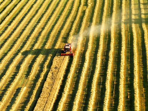 Traces of a combine harvester harvesting from above Freedom Agriculture Forestry Industry Field Work and employment Flying Yellow Moody Endurance Performance
