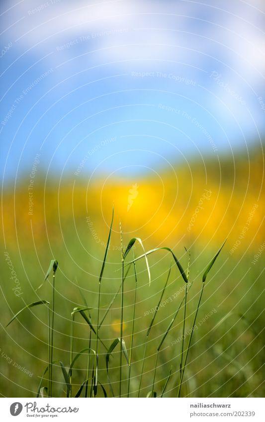vernal Environment Nature Landscape Plant Sky Clouds Sunlight Spring Climate Beautiful weather Grass Foliage plant Wild plant Meadow Field Esthetic Bright Blue