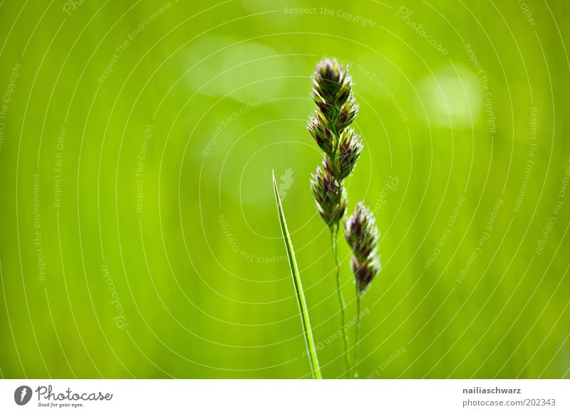 Nature Green Plant Summer Life Meadow Grass Spring Field Weather Environment Fresh Esthetic Climate Beautiful weather Environmental protection
