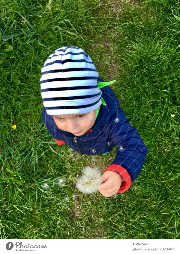 Human being Child Vacation & Travel Plant Beautiful Green Joy Far-off places Face Meadow Grass Playing Freedom Head Leisure and hobbies Contentment