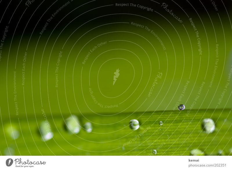 Nature Beautiful Green Plant Leaf Grass Spring Rain Glittering Drops of water Wet Fresh Esthetic Climate Fluid