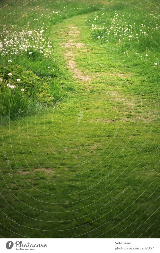 Nature Flower Green Summer Vacation & Travel Calm Relaxation Meadow Grass Freedom Lanes & trails Park Landscape Field Environment