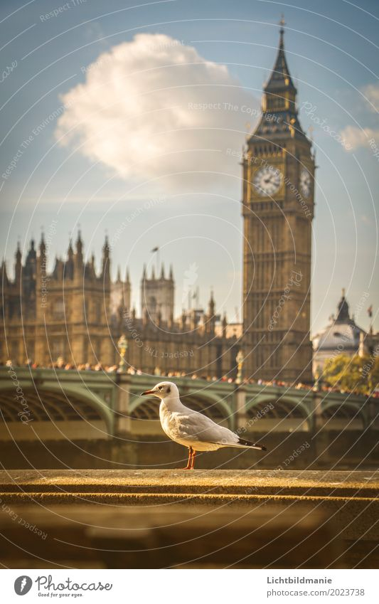 City seagull in London Lifestyle Tourism Sightseeing City trip Human being Crowd of people Sky River bank Themse Themse bridges Great Britain Town Downtown