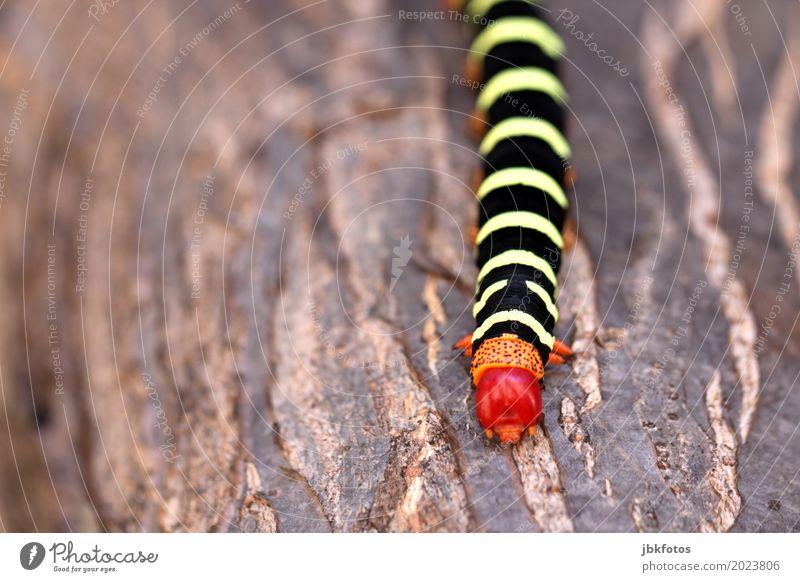 Nature Plant Beautiful Animal Environment Exceptional Esthetic Uniqueness Cuba Climate change Farm animal Caterpillar