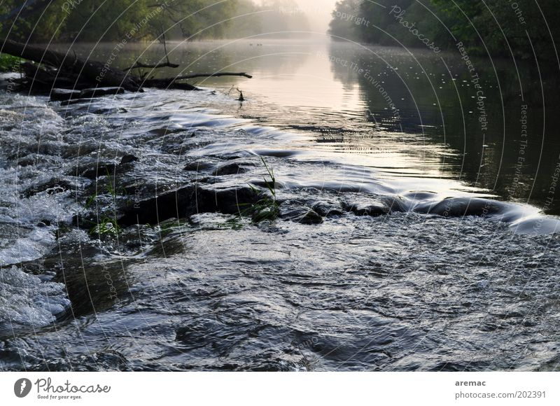 morning mood Nature Landscape Water Summer Fog Tree River bank Clean Wild Calm Rapid Saale Colour photo Subdued colour Exterior shot Morning Dawn Current Day