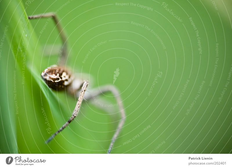 iiihhhh Wild animal Spider 1 Animal Disgust Green Escape Large Leaf Spider legs Fear Scared Beautiful Colour photo Detail Macro (Extreme close-up) Deserted