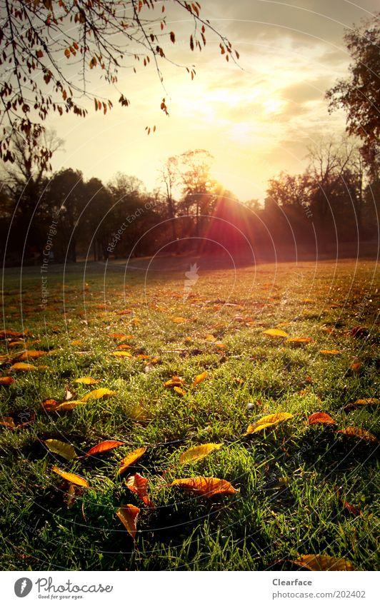 Sky Nature Beautiful Landscape Yellow Emotions Autumn Meadow Grass Happy Park Contentment Gold Joie de vivre (Vitality) Romance Brave