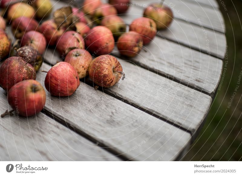 farm apples Food Fruit Apple Nutrition Organic produce Vegetarian diet Natural Juicy Sour Brown Red Authentic Wooden table Subdued colour Exterior shot Close-up