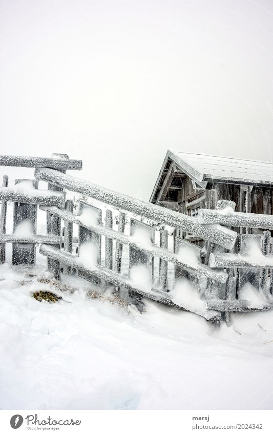 Winter magic after the storm Bad weather Ice Frost Snow Hut Wooden fence Cold Frozen Fence Subdued colour Exterior shot Pattern Deserted Copy Space top Morning