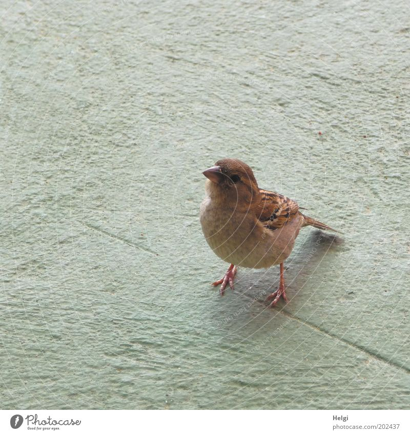 Animal Gray Brown Bird Wait Stand Authentic Wing Observe Natural Curiosity Wild animal Cute Appetite Watchfulness Smart