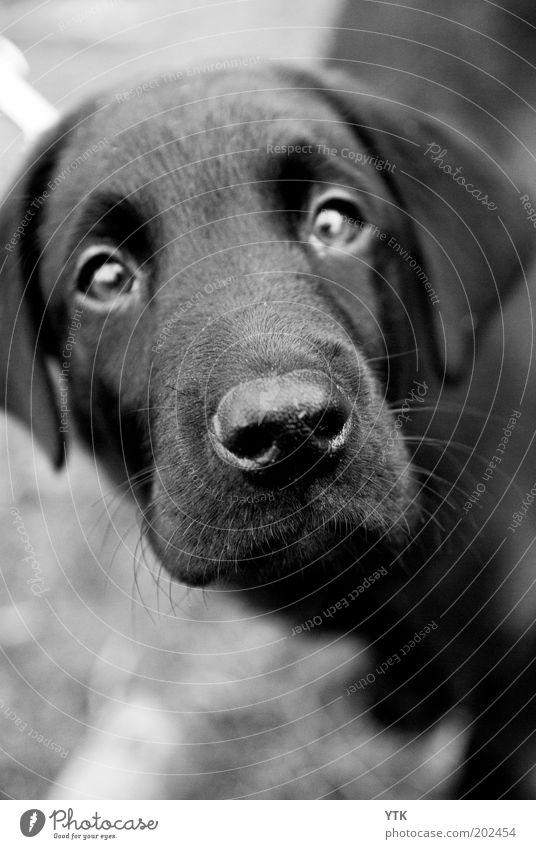 Dog Beautiful Animal Black Sadness Hair and hairstyles Esthetic Cute Nose Curiosity Pet Odor Animal face Concern Ask Expectation