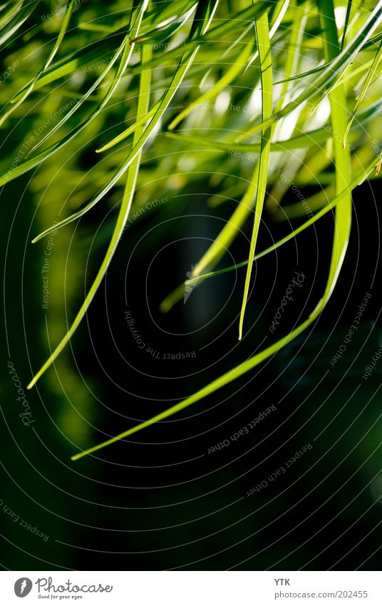 Nature Green Plant Summer Black Colour Grass Environment Moody Air Warmth Fresh Growth Bushes Change Blade of grass